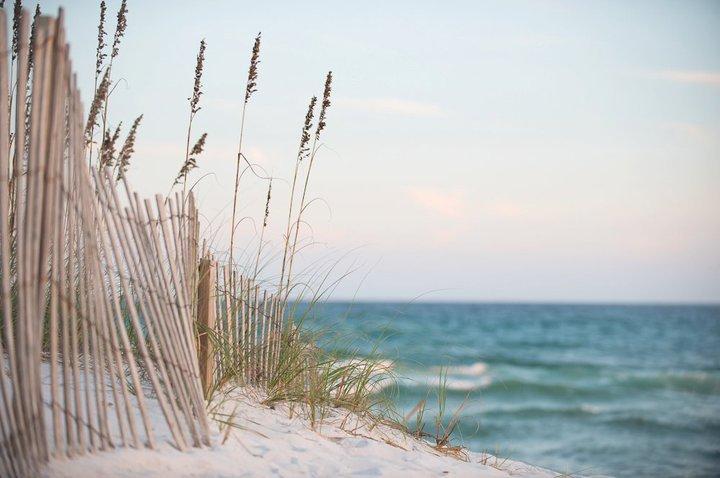 Navarre Beach sand dunes and grass