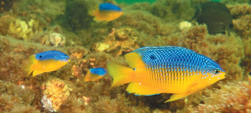 Navarre Beach Marine Park Fish