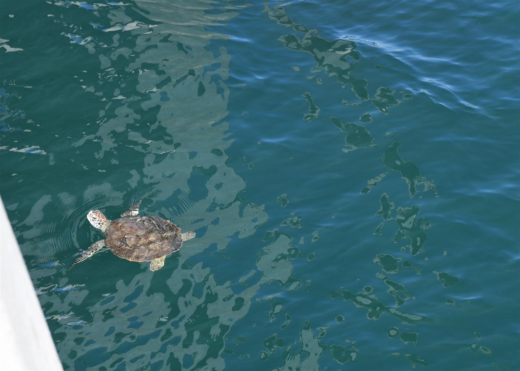 sea turtle navarre beach