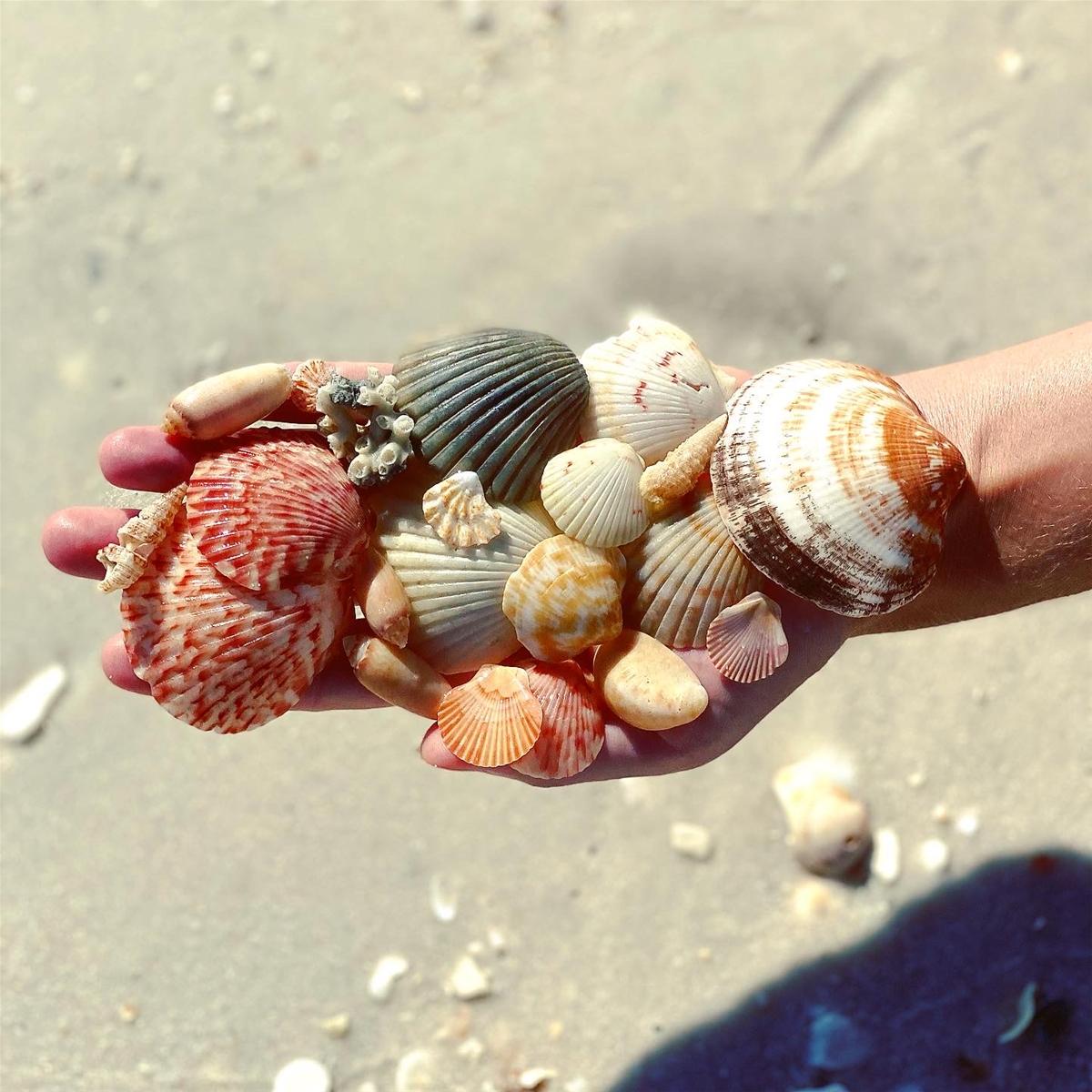 navarre beach shells